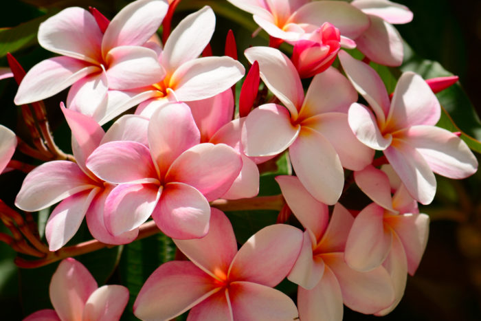16. Nothing quite compares to the smell of fresh tropical flowers.