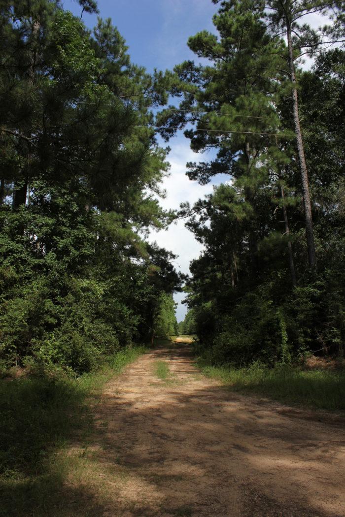 9. Bragg Road (Saratoga)