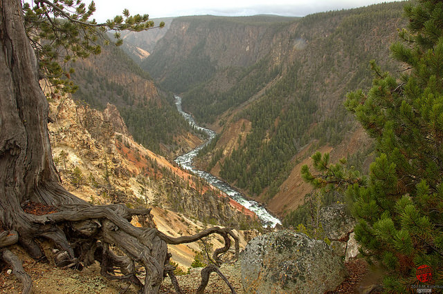 6. The Grand Canyon of Yellowstone