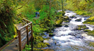 11 Easy Hikes To Add To Your Outdoor Bucket List In Oregon