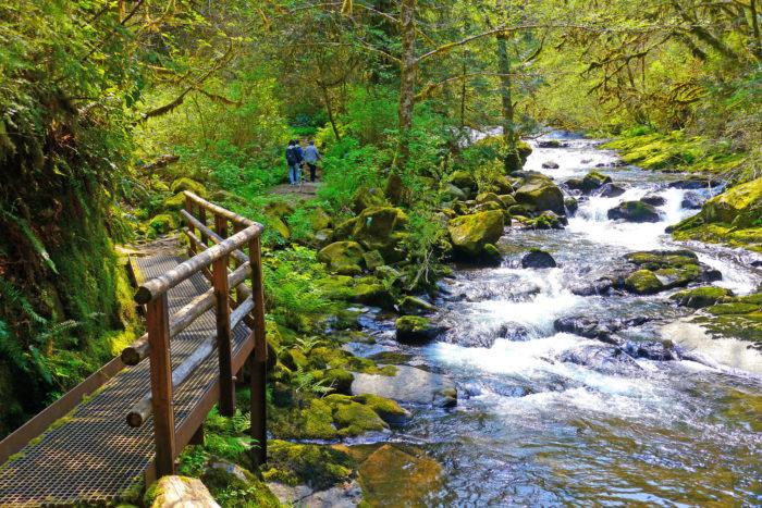 2. Sweet Creek Falls Trail, 2.2 miles