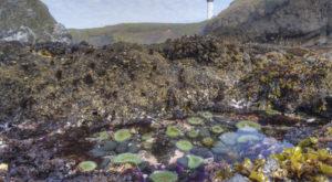 10 Gorgeous Places To Explore Tide Pools On The Oregon Coast