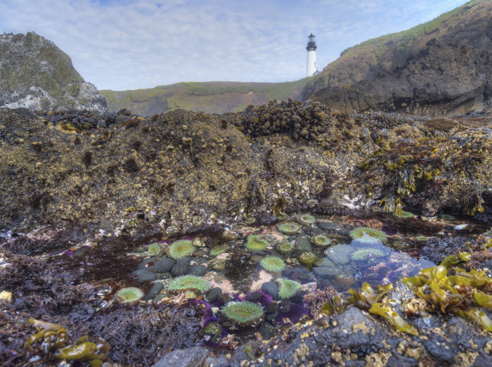 10 Gorgeous Places To Explore Tide Pools On The Oregon Coast