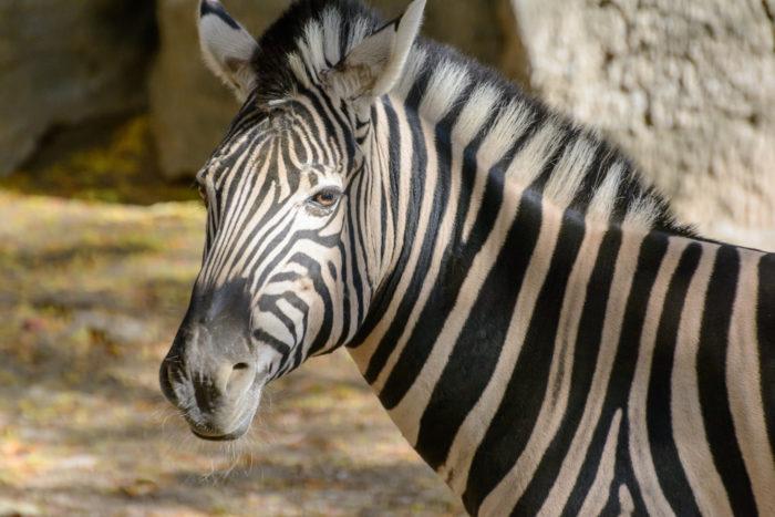 3. Philadelphia Zoo, Philadelphia