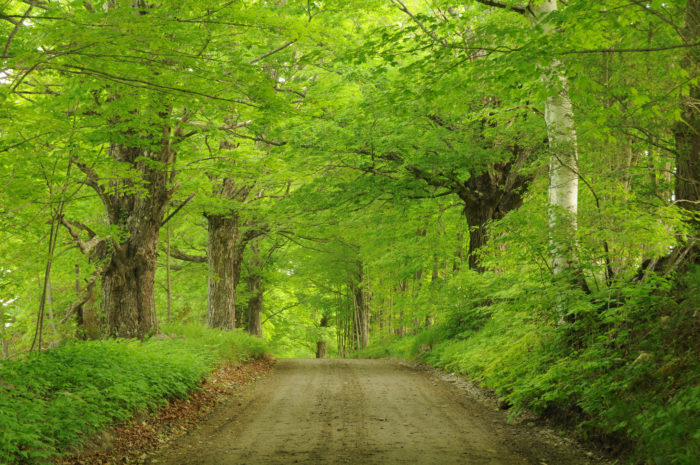 Or skip the shopping and simply drive on the lovely country roads...