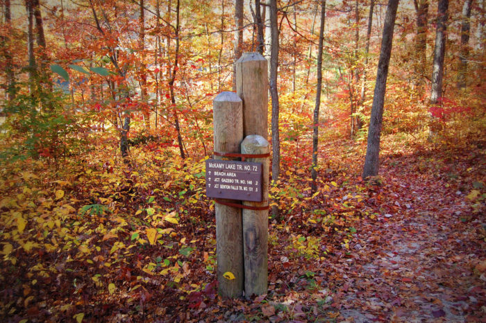 2. Chilhowee Trails