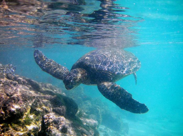 19. Hawaii is home to incredible sea life.