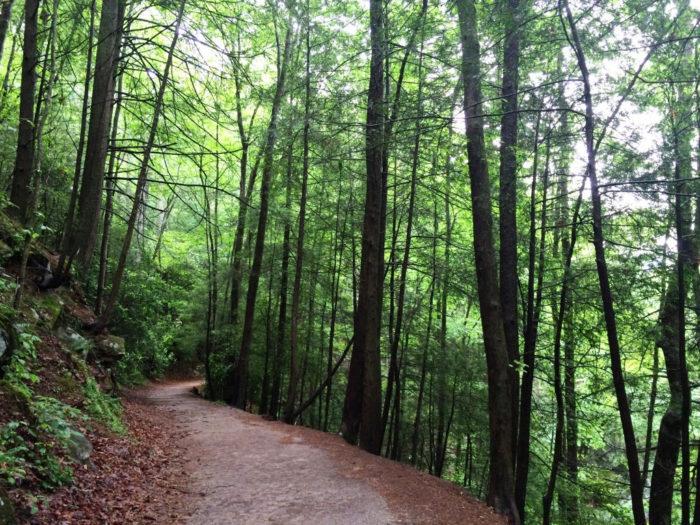 8. Dukes Creek Falls Trail—2 miles