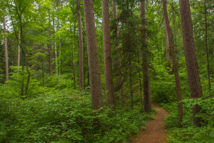 You can walk a 1-mile path that will take you through trees up to 350 years old...