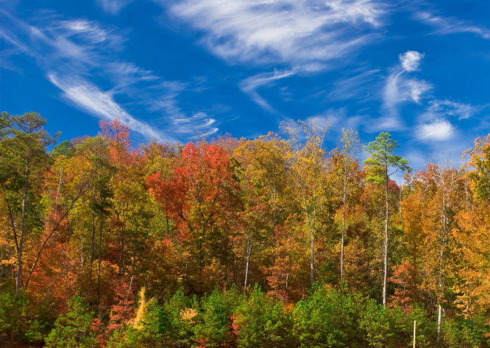 7. All four seasons are experienced in Alabama.