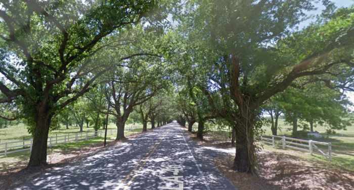 So next time you are in the area, make sure you check out this tree tunnel on St. Bernard Hwy.