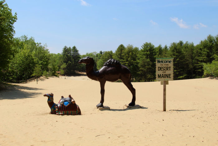 Stop #2: Next, head to the totally strange Desert of Maine in Freeport.
