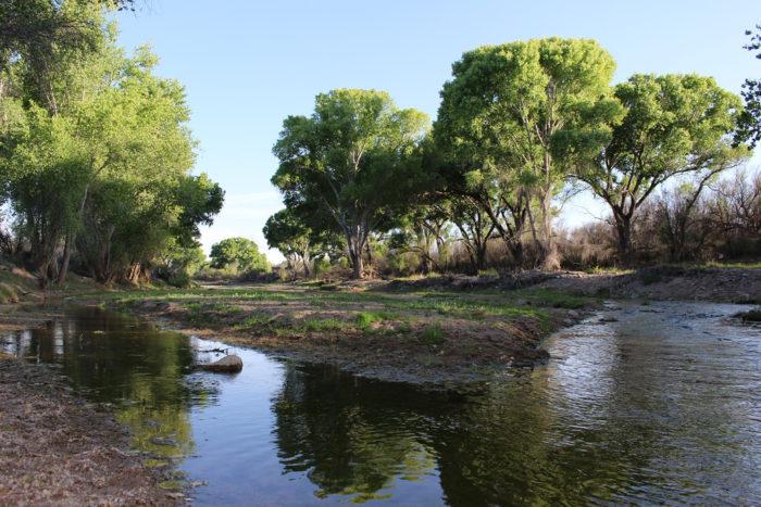 9. San Pedro Riparian National Conservation Area