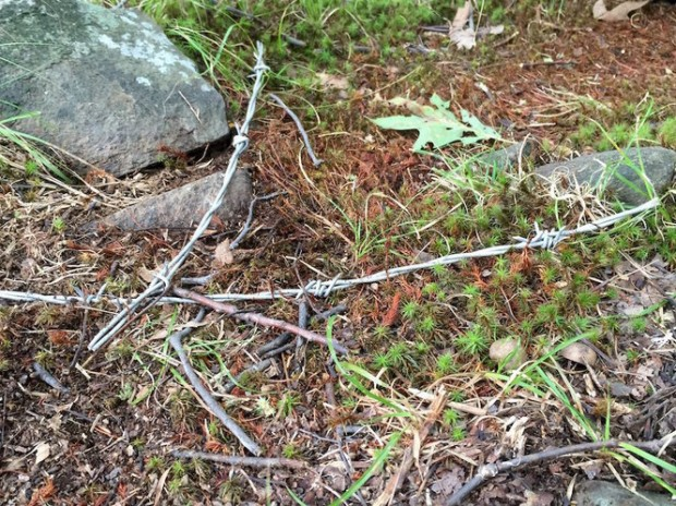 Here you can see some of the pieces of barbed wire found along the High Mountain Park trails.