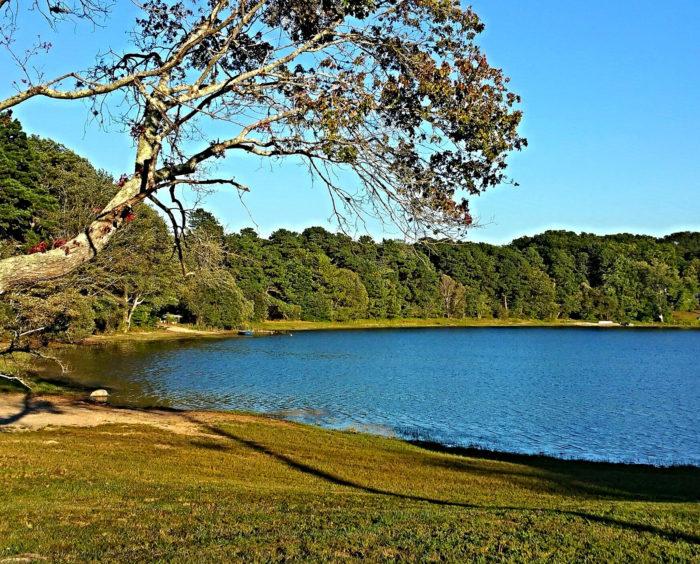 3. Flax Pond, Dennis