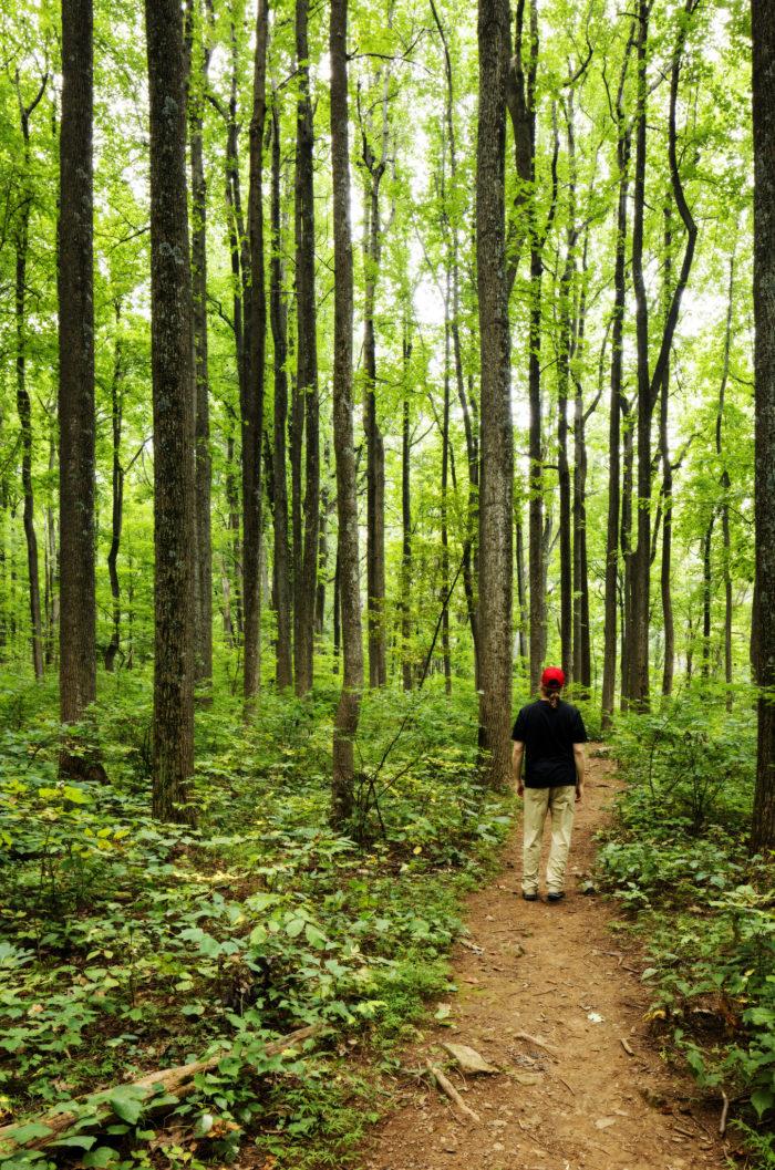 16. Go for a hike in Shenandoah National Park.
