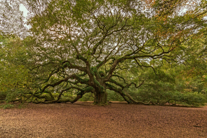 5. You just can't find neat stuff like the Angel Oak anywhere else.