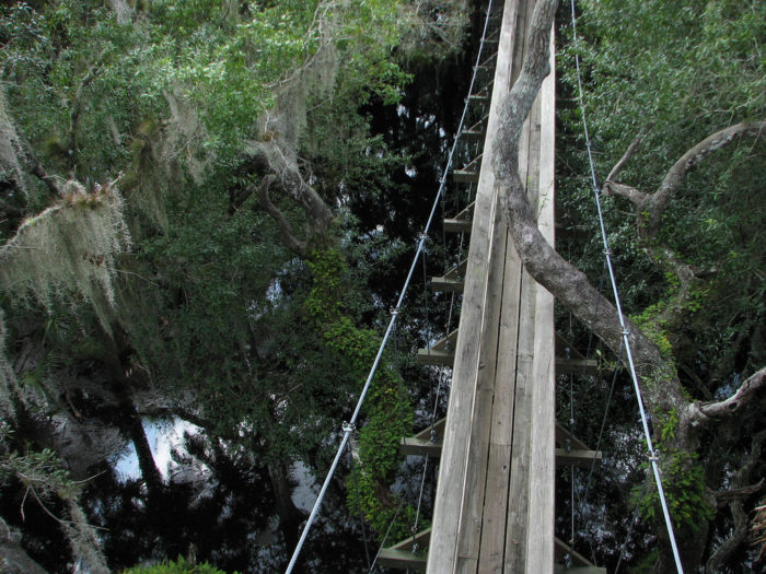 5. Canopy Walk, Myakka River State Park