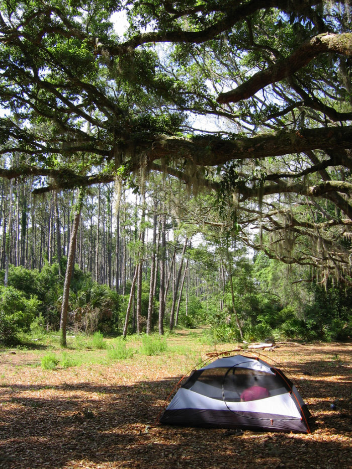 7. Cumberland Island National Seashore—Stafford Beach Campground: Stafford Beach Rd, St Marys, GA 31558