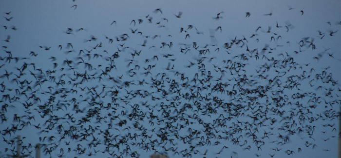 There's nothing to be afraid of, either - studies have shown that bats are actually extremely loving creatures.