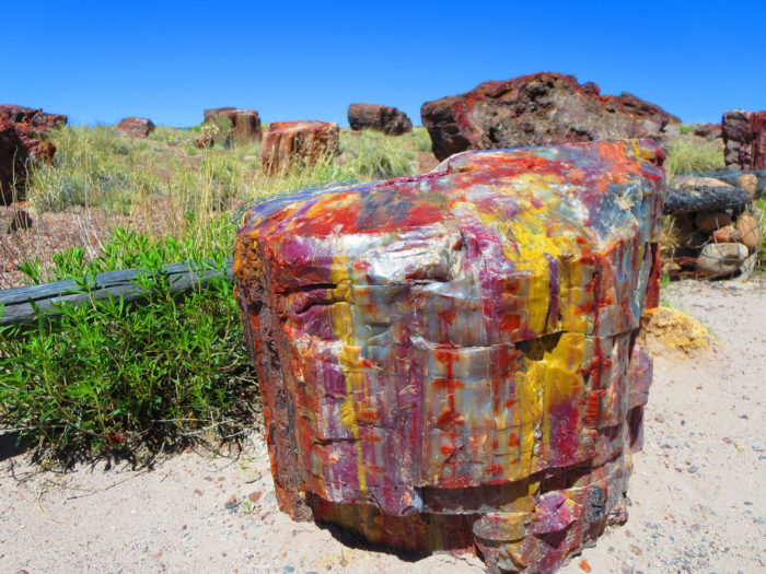 12. Petrified Forest
