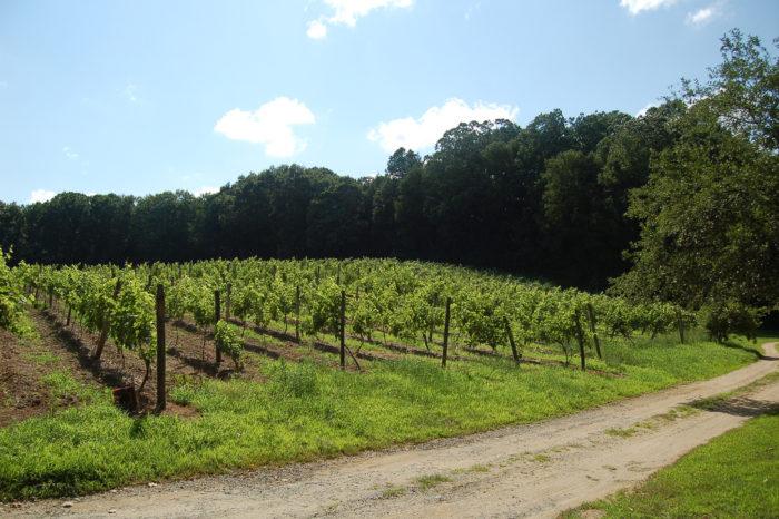 14. Weekend getaways at the vineyards.