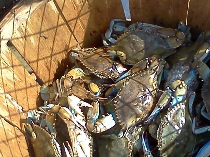 Crabbing is another popular activity at Woodland Beach.
