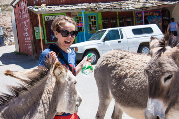 8. And, of course, there's the wild burros that wander throughout town from sunrise to sundown.