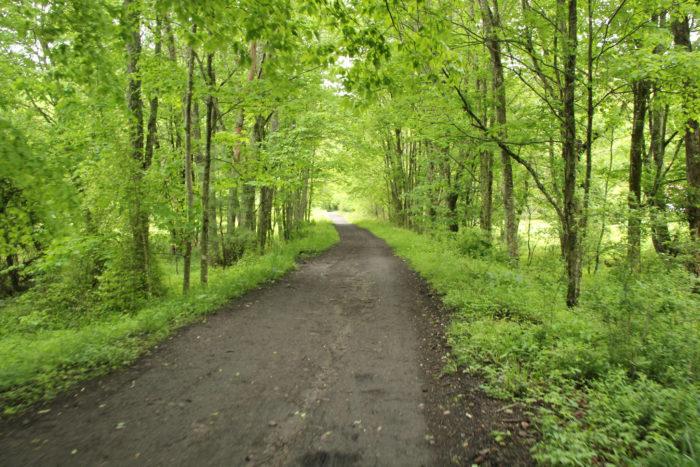 6. Bike along Abingdon's beautiful Virginia Creeper Trail