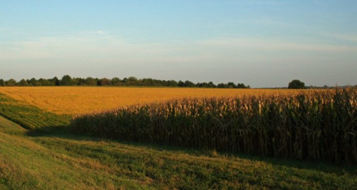 7. Soybean fields line a country road in autumn.