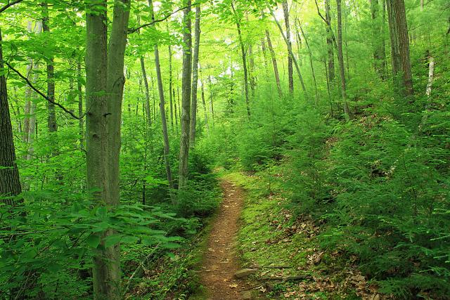 3. Golden Eagle Trail - Tiadaghton State Forest