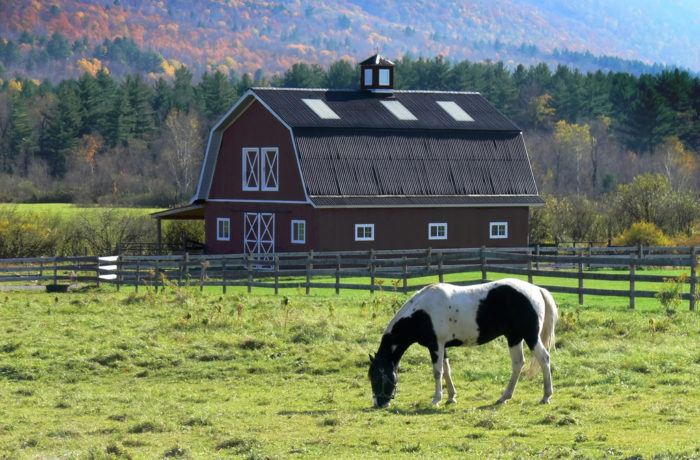 4. The farm life is alive and well in Connecticut!