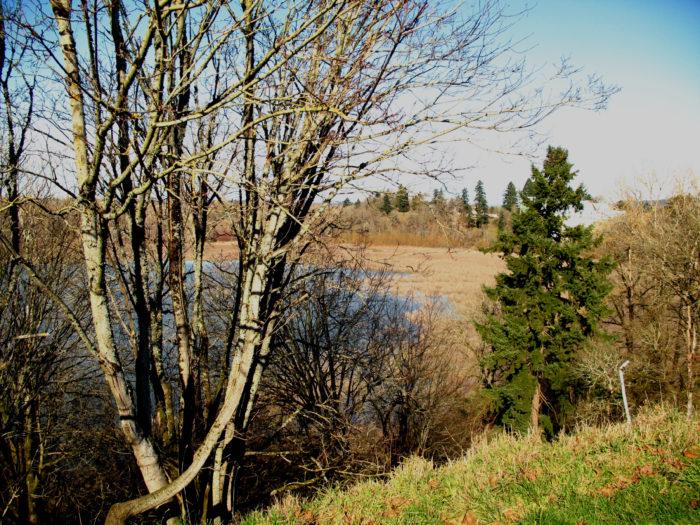 5. Oaks Bottom Wildlife Refuge