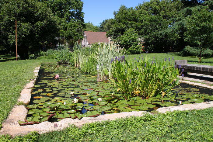 You can walk around the ponds, explore nature, and capture photos of the beautiful lilies and lotuses.