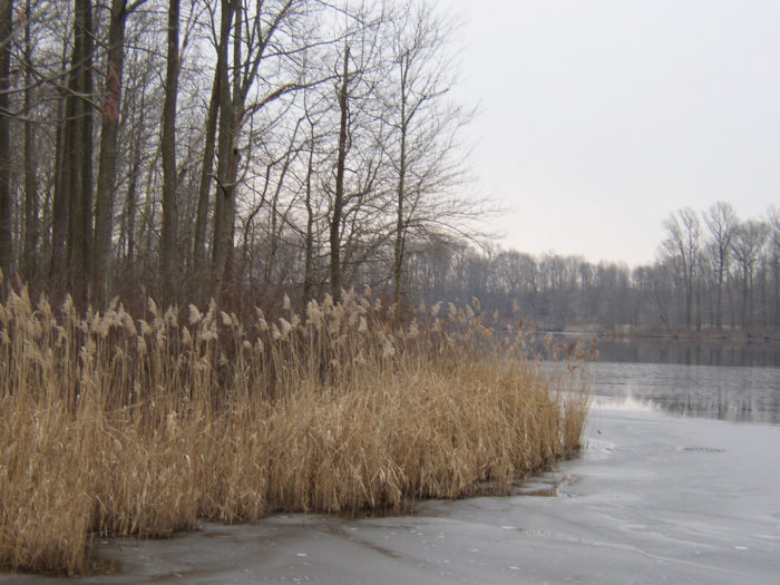 10. Lum's Pond State Park