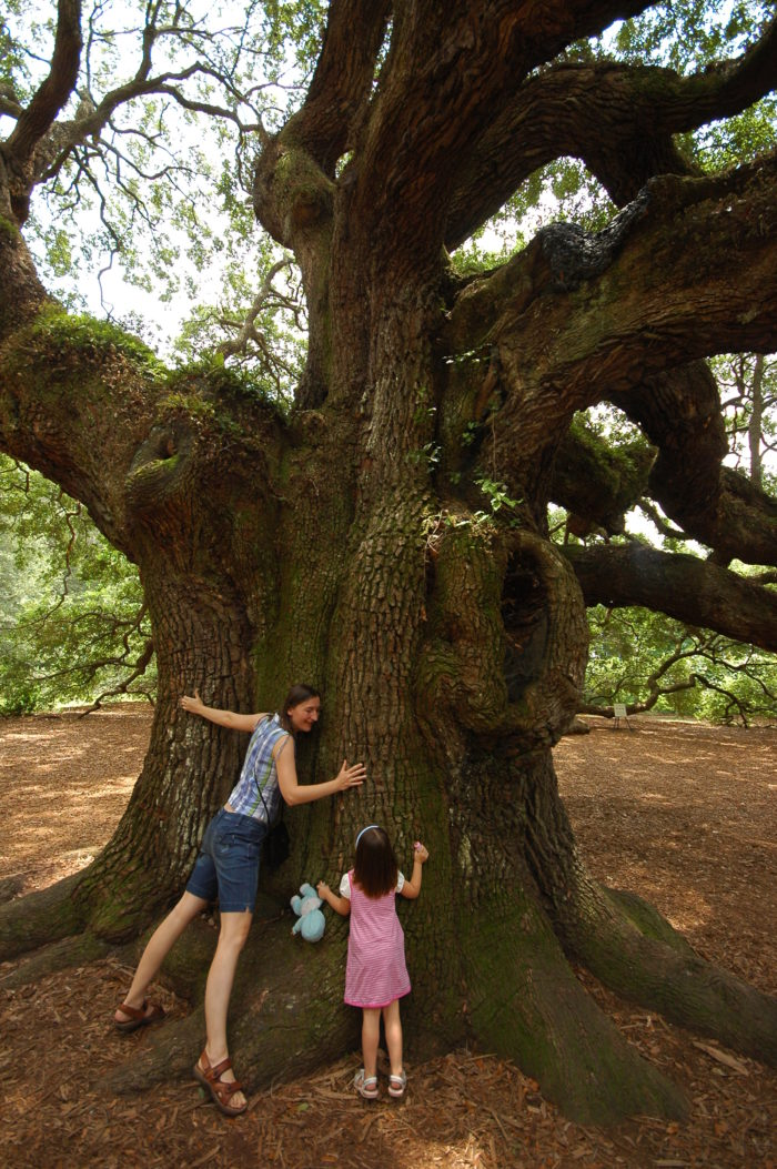 2. Angel Oak Park - Johns Island