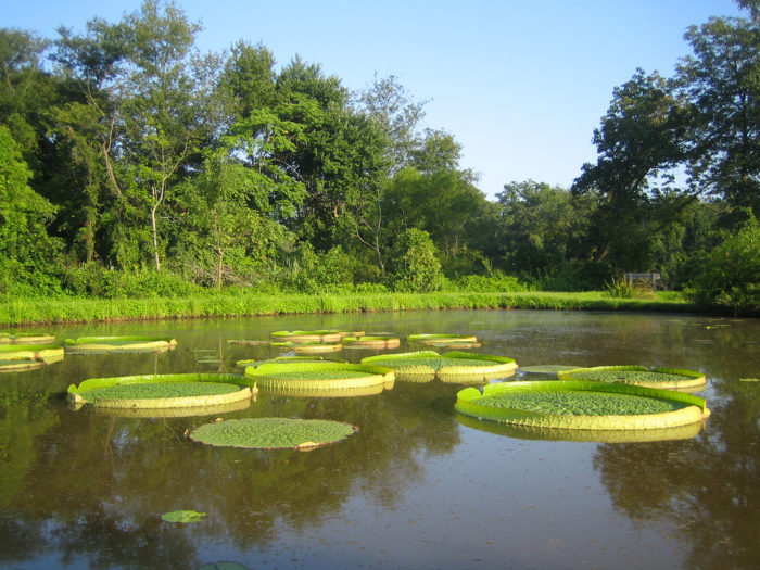 Kenilworth Gardens are actually a National Park full of marshes, ponds, and beautiful lilies and lotuses.