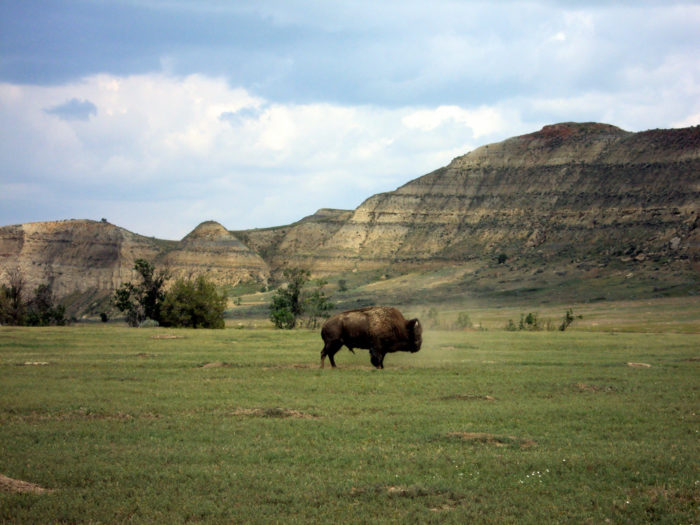 5. Stop by Medora and the Theodore Roosevelt National Park, where the buffalo really roam. They don't advertise it everywhere for no reason!