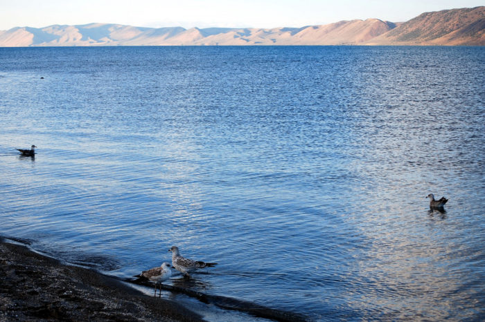 While waterfowl and fish may make up the majority of the wildlife you'll see here, Bear Lake is also said to be home to a water monster.