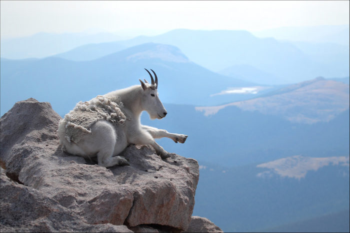 11. You can even drive to the summit of Mount Evans over 14,000 feet, on the highest paved road in North America.