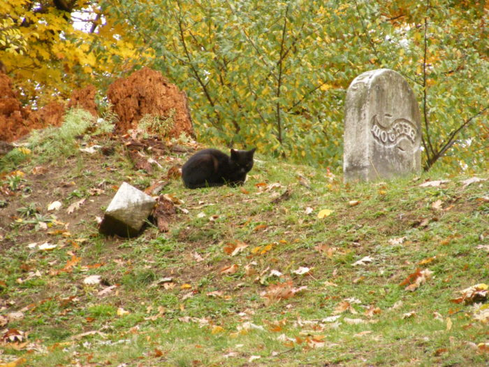 1. Mount Hope Cemetery - Rochester