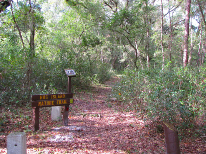 1. Hog Island Nature Trail, Withlacoochee State Forest