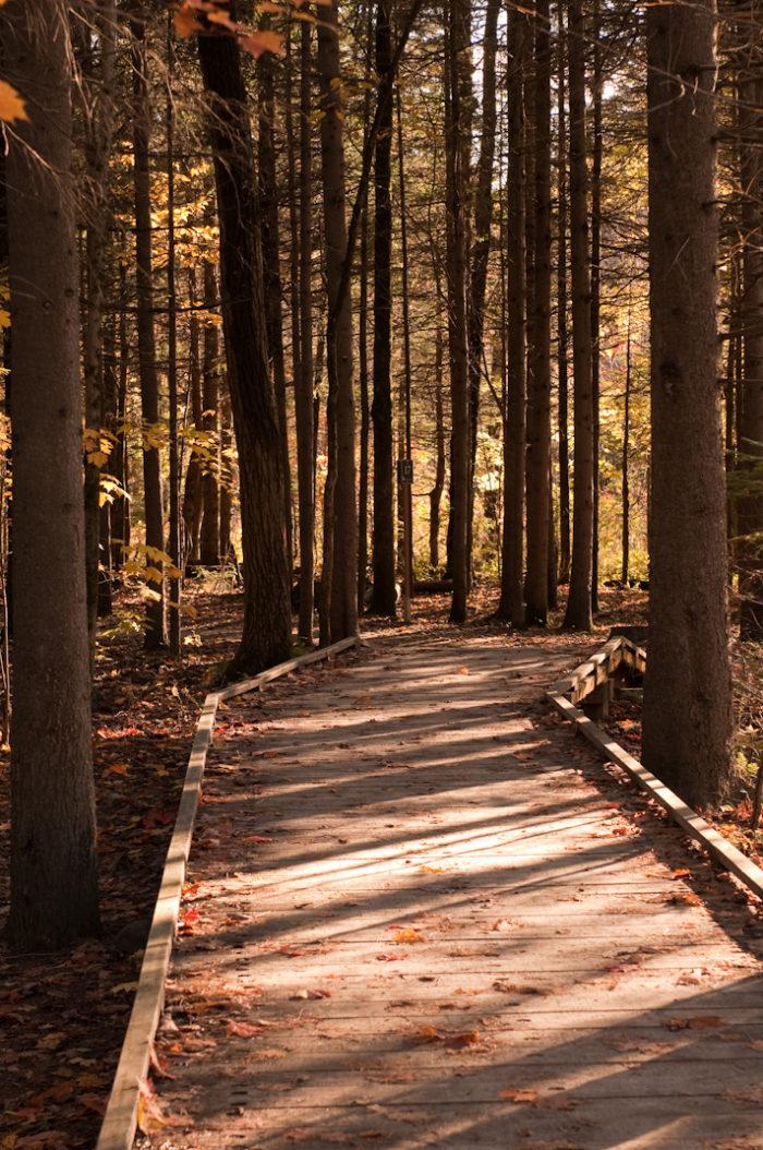 4. Blackwell Island Park Nature Trail, Coeur d'Alene