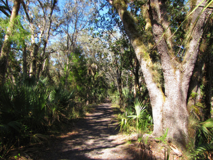 2. Kolokee Trail, Little Big Econ State Forest
