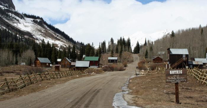 In 1928, more than a decade after the town had been declared a ghost town, the land was purchased by Dr. John Johnson and converted into the Rocky Mountain Biological Laboratory, which specializes in the research of climate change, ecology, the study of marmots, and more.