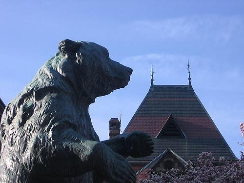 5. Kodiak Bear, Providence
