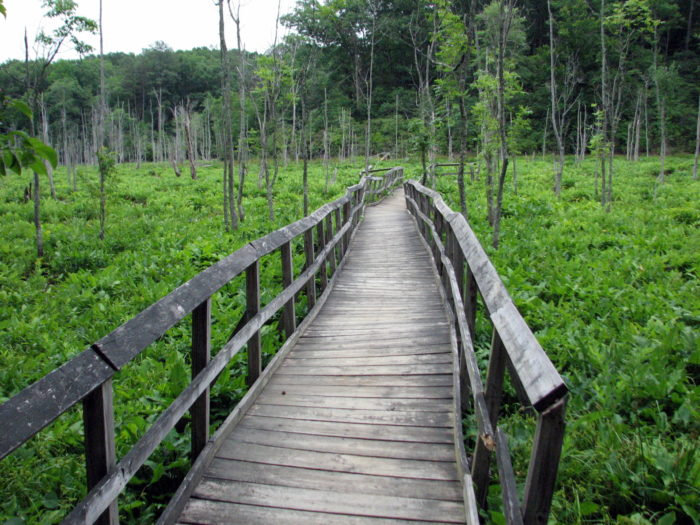 And come across charming boardwalks.