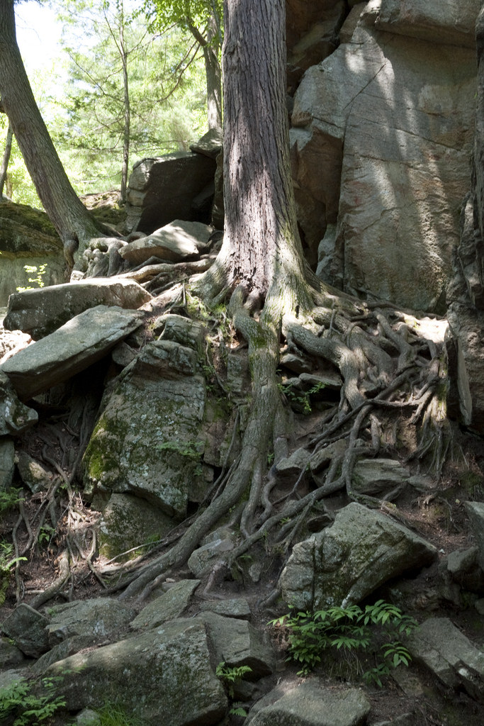 The twisted roots and gnarled branches of ancient trees reach down into the chasm. They provide the perfect foothold for climbing or shade for a quick rest.