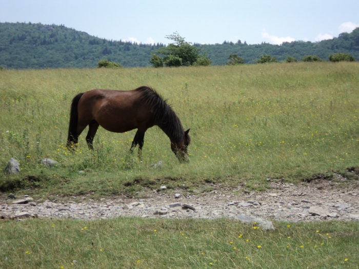 4. The chance to see the wild mountain ponies