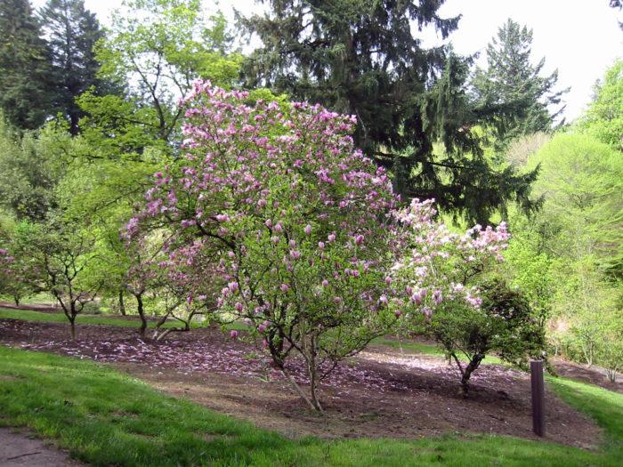 1. Hoyt Arboretum